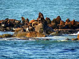 Ilha dos Lobos: Praia de Torres