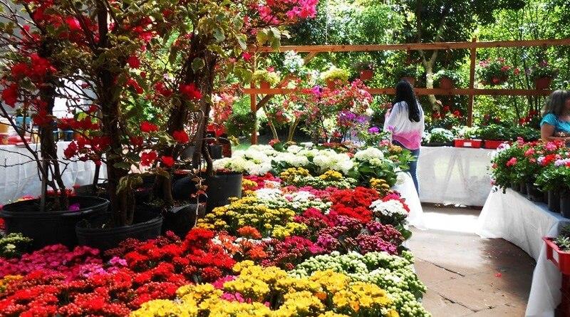 Ivoti - cidade das flores - evento feira das flores