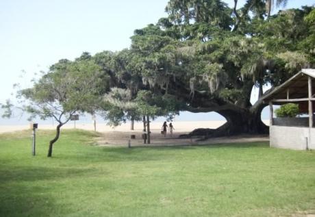 Praia dos Pinheirais - Tapes